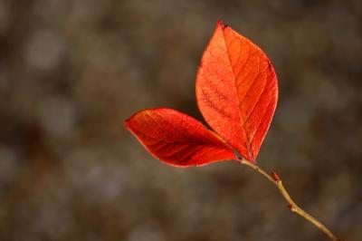 Autumn Tasks