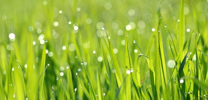 Do it Yourself Lawn Care: Are You Sure?